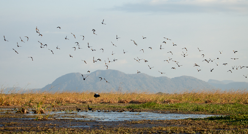 Birds flying, Palo Verde National Park.