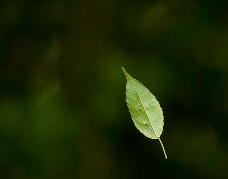 Leaf suspended in the air. Look closely.