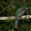 Bird, La Selva