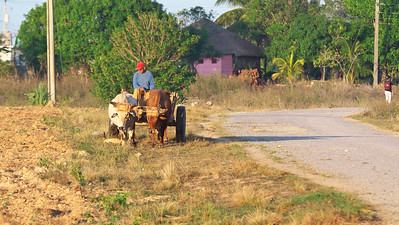 A common sight in the rural areas