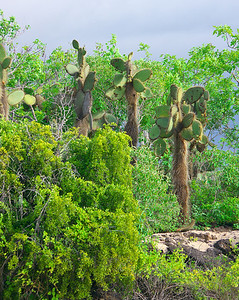 Cerro Dragon vegetation
