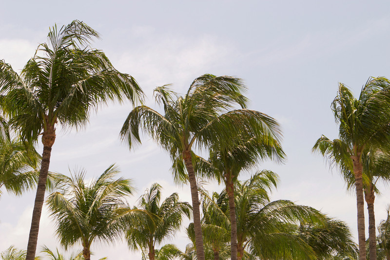 Several palm trees outlined against the sky.