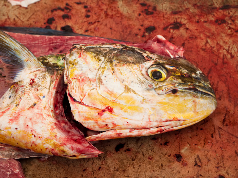 A bloody fish head on the cutting table at a fish market.