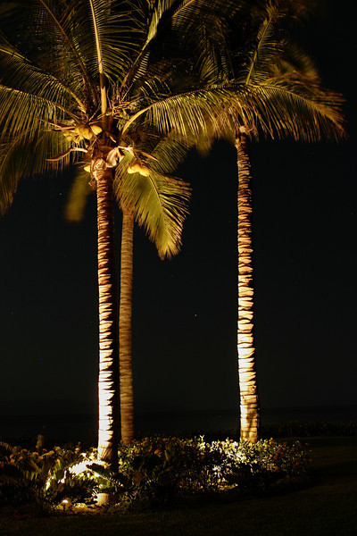 A small grove of palm trees illuminated by lights at night. The illumination from below gives a high level of contrast with the trees against the black of night.