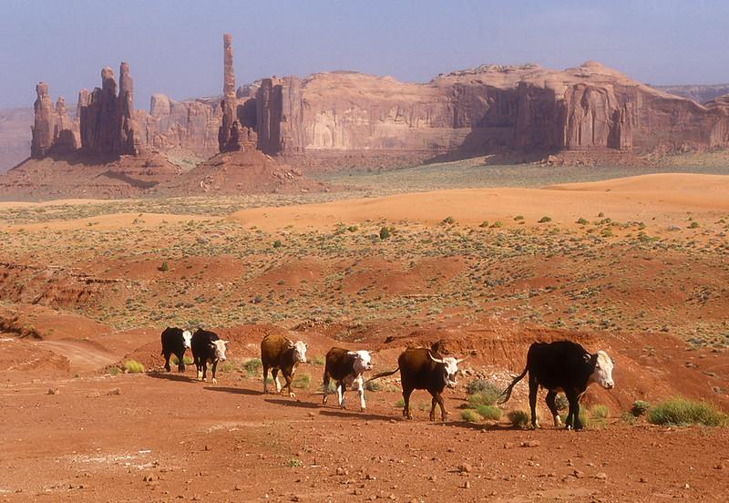 Utah_film_cabras_Monument_Valley_cows_alto010556