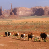 Utah_film_cabras_Monument_Valley_cows_alto010556