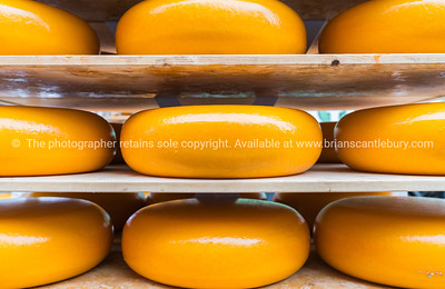 Large yellow rounds of gouda cheese closeup on shelves ready for market.