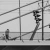 Crossing Erasmus Bridge