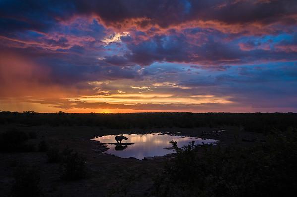 Black Rhinoceros at Sunset