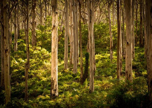 Ferns @ Forests near Margaret River
