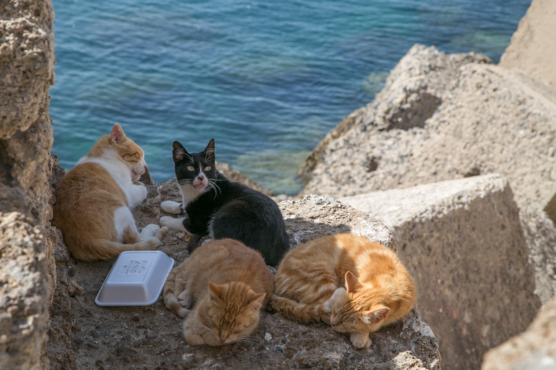 Stray cats along the Cadiz waterfront