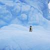 Lonely Adele Penguin, Yalour Islands, Antarctic Peninsula