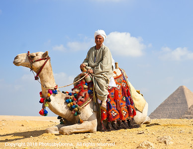 Resting camel pose