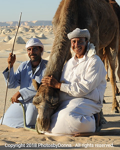 For the love of a good camel