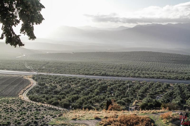 Culture de l'olivier près de Baeza