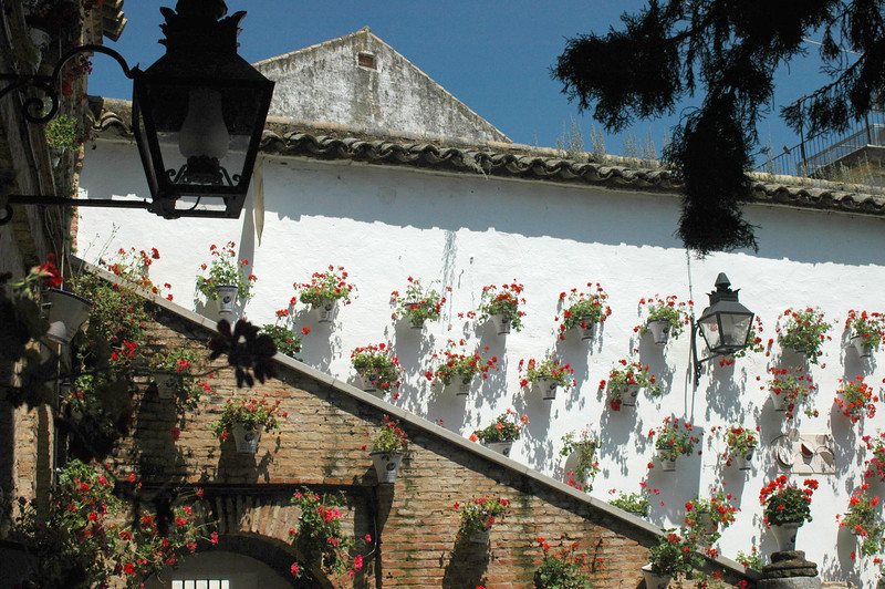 In Cordoba, flower pots were hung off walls.
