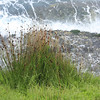 The Grass, Bondi Beach