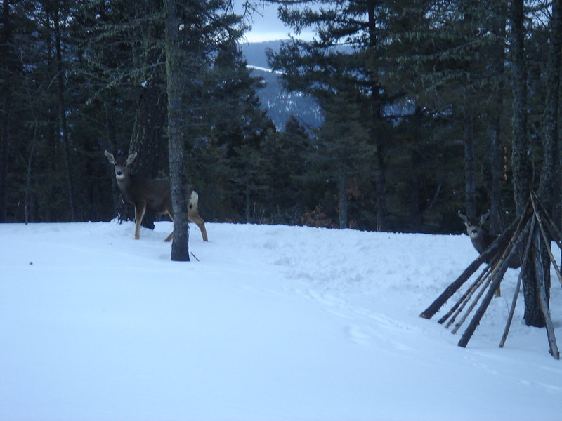 A couple of deer met us at the cabin (1/11/08).