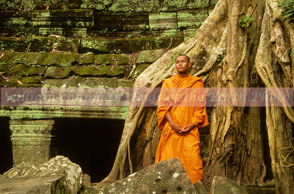 Ancient tree of Ta Prohm