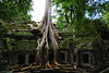 Ta Prohm in its natural state