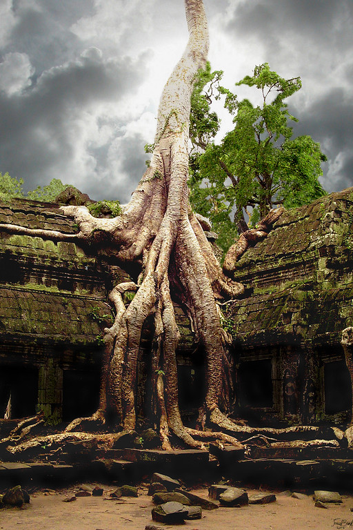 Ta Phrom wat with Bayan Tree, Color composite, Angkor Wat, Cambodia