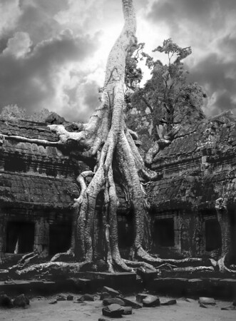 Ta Phrom wat with Bayan Tree, Black & white composite, Angkor Wat, Cambodia