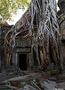 Ta Prohm Temple -2
