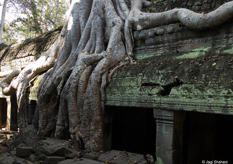Ta Prohm Temple -1