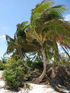 Gilligan's island, Shoal Bay Beach, Anguilla
