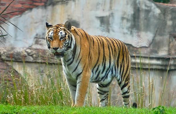 Animal Kingdom, Disney World 2011