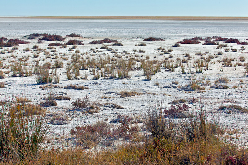 """This is Etosha Pan, large flat area, usually dry, surrounded by much smaller water holes and artesian springs. The word """"etosha"""" means """"Great White Place."""""""