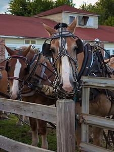 Horse Pulling Team