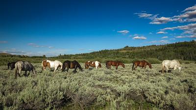 Ranch Horses in Grand Teton