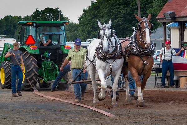 Horse Pulling Team in Action