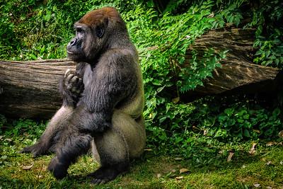 Hubbard Gorilla Valley