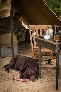 Marine Dog Soldier