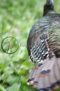 Turkey on the run! I really like this photo. Tikal, Guatemala.