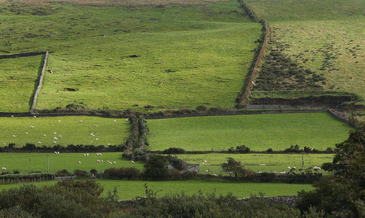 Hill near our Dingle home.