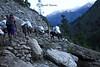 4 donkeys