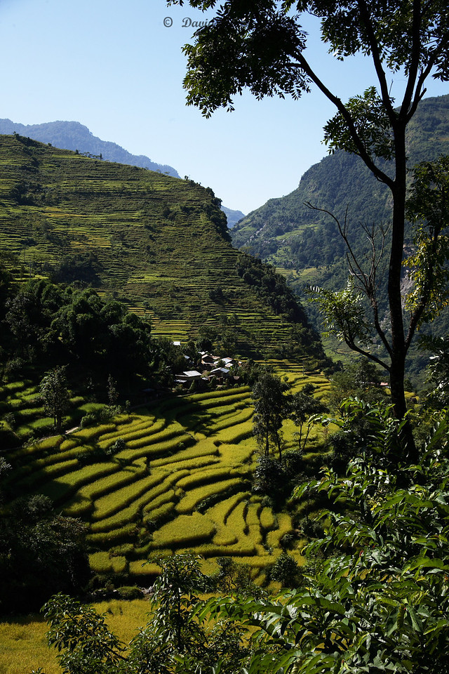 8 Terraced fields and trees