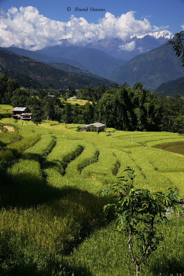 2 v rice terraces