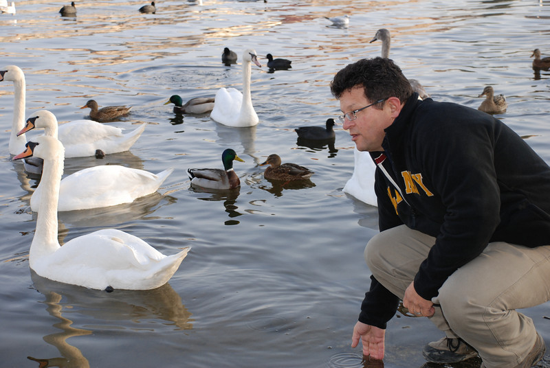 Tony and Prague Swans 4