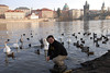 Tony and Prague Swans 10