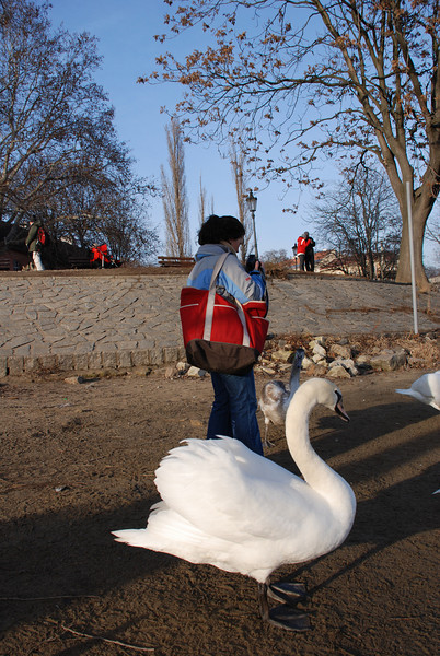 Anna and Swans in Prague 1