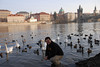 Tony and Prague Swans 9