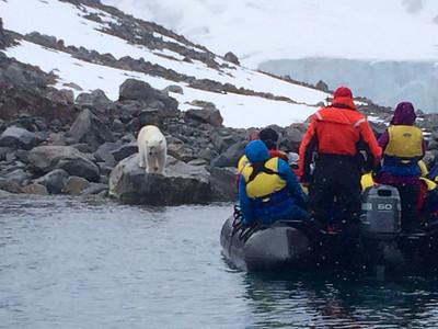 "Spitsbergen July 2014 with Wayne Petersen ""Polar Bear and Zodiac"""