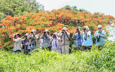 """Cuba July 2014 with Dave Larson and Bill Gette """"Birding"""""""
