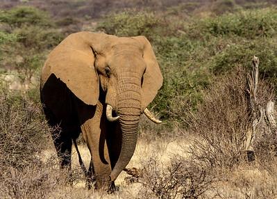 "Kenya March 2014 with Dave Larson ""Elephant"""