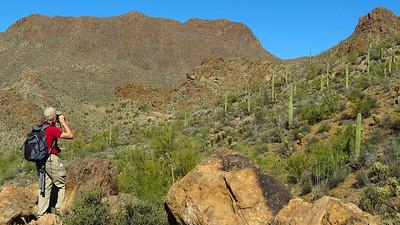 "Arizona January 2014 with Bob Speare ""Arizona Birding Scene"""