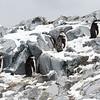 Penguins_Chinstrap_Hydrurga Rocks_Antarctica-1